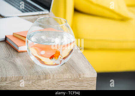 selective focus of aquarium with gold fish near books on wooden table - Stock Photo