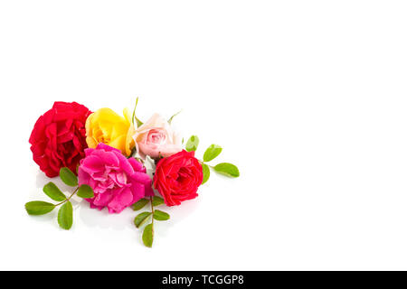 Group of Roses isolated on white background. Roses composition for cards, frame, poster, banner - Stock Photo