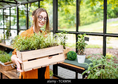Young woman taking care of plants, growing herbs and flowers in the beautiful greenhouse - Stock Photo