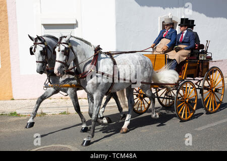 Two Lusitano horses horse-drawn carriage in  Golegã. This region has the oldest and most prestigious Lusitano horse breeders in Portugal.  An annual N - Stock Photo