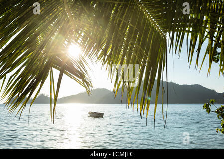 Palm Leaves Of A Tree On Baie Lazare Beach At Sunset, Mahe Island, Seychelles - Stock Photo