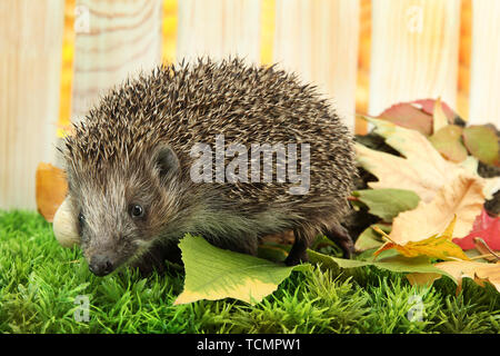 Hedgehog on autumn leaves, on wooden background - Stock Photo