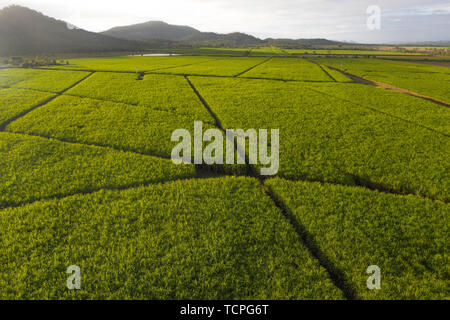 Aerial view over plantation of sugar canes agriculutural landscape in tropical wonderland with mountains in the background and path inbtween fields - Stock Photo