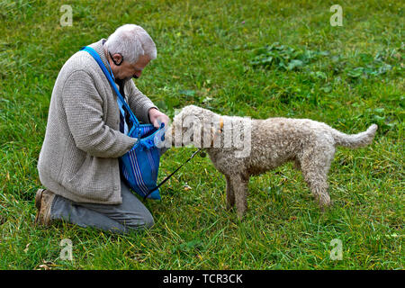 Dog owner searching for a compensation for his truffle dog of the Lagotti Romagnolo breed during a presentation, Bonvillars truffle market,Switzerland - Stock Photo