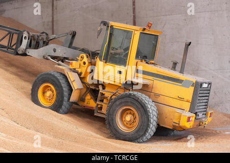 Wheel loader working at grain wheat warehouse. Agriculture industry . - Stock Photo