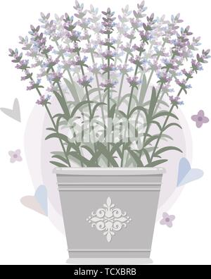 Bouquet of lavender in a bucket. Vector illustration. Eps 10 - Stock Photo