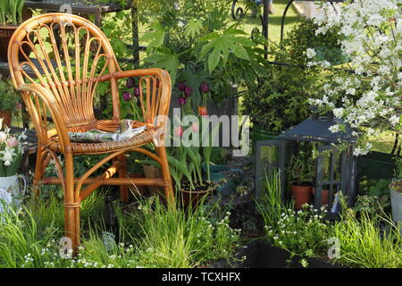 Small urban green space with cosy seating and Aquilegia 'Clementine White', Rosa banksiae, fatsia, grasses, ivy, exochorda and Malus 'Freya' - Stock Photo