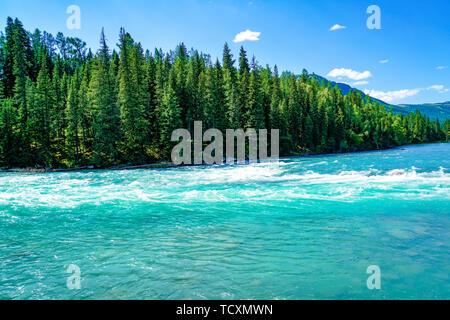 The woods by the summer lake of Kanas Lake, Xinjiang - Stock Photo