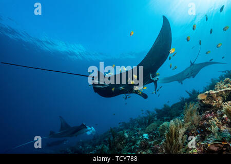 Cloak of the manta ray