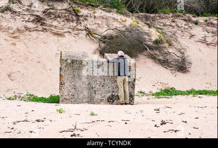 Senior man looking at World War II concrete bunker buried on Tyninghame beach, East Lothian, Scotland, UK - Stock Photo