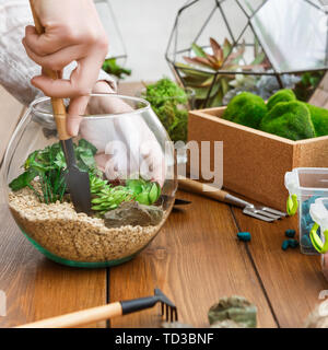 Woman transplanting plants in florarium. Mini gardening concept - Stock Photo