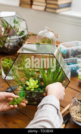 Woman making composition in florarium with succulent plants - Stock Photo