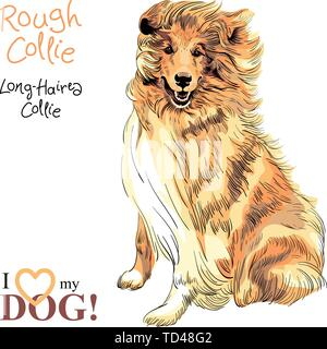 dog Rough Collie breed vector - Stock Photo
