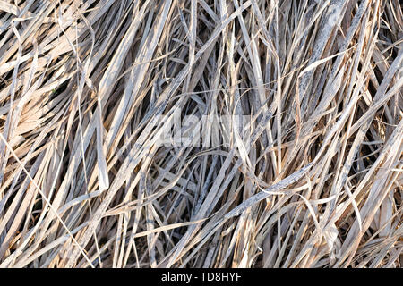 Dried long grass or hay background. Closeup view - Stock Photo