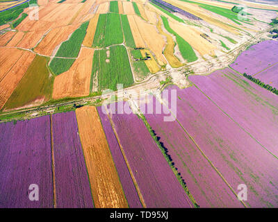 High-definition picture of land color aerial photography of farmland in Yili farmland, Xinjiang - Stock Photo