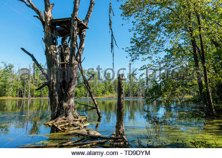Rickety unsafe observation platform in tree in Rouge National Urban Park in Pickering Ontario Canada. - Stock Photo