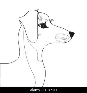 dachshund breed dog in profile with beautiful dedicated eyes of a dachshund breed - Stock Photo