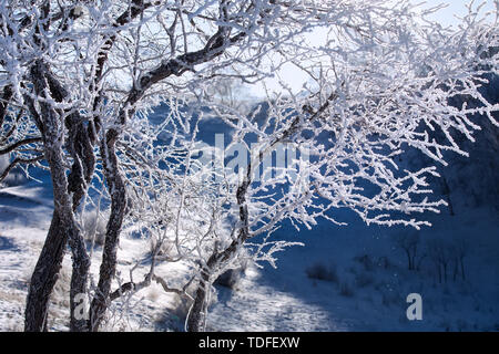 The tree hangs ice. - Stock Photo