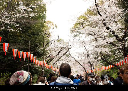 Japanese people and foreigner traveler walk relax and travel visit looking sakura flowers in Ueno public park at Ueno city on March 30, 2019 in Tokyo, - Stock Photo