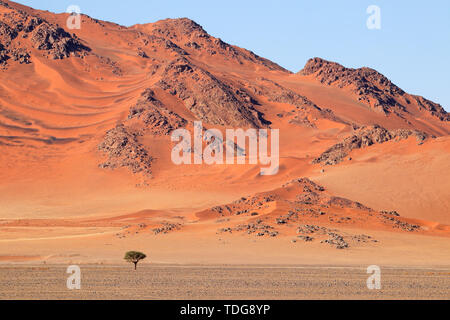 Rugged dune landscape, Sossusvlei, Namib desert, Namibia - Stock Photo