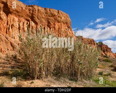 Red high cliffs and wild nature at Paraia da Falesia, a famous paradise beach in Albufeira at the Algarve coast of Portugal - Stock Photo