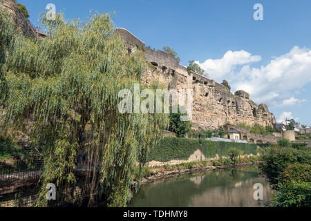 Weeping willow along Alzette river in Luxembourg city downtown Grund - Stock Photo