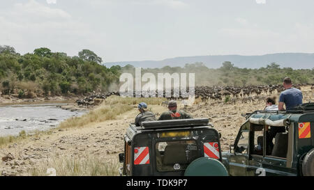 tourists in 4wd vehicles watch wildebeest massing at the mara river in the masai mara game reserve, kenya - Stock Photo