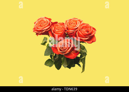 Red roses with large buds and green leaves on a yellow background. The concept of art. Trendy bouquet of roses. Creative style. Art gallery - Stock Photo