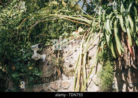 A hidden camera or a hidden CCTV among the plants. - Stock Photo