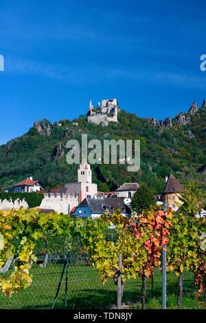 Ruine Duernstein, Weinberge, Duernstein, Wachau, Oesterreich, Europa - Stock Photo