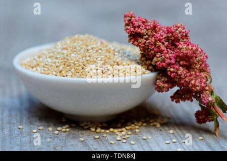 Quinoa in Schale und reifer Quinoa-Zweig, Chenopodium quinoa - Stock Photo