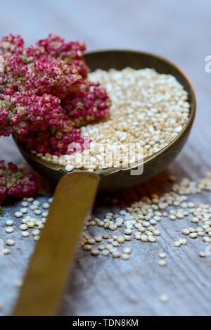 Quinoa in Kelle und reifer Quinoa-Zweig, Chenopodium quinoa - Stock Photo