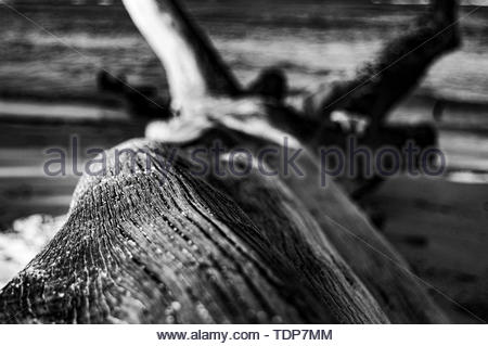 sand grains and wood - Stock Photo