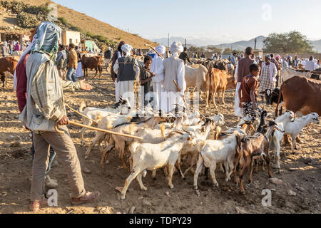 Goat herders with their goats at the Monday livestock market; Keren, Anseba Region, Eritrea - Stock Photo