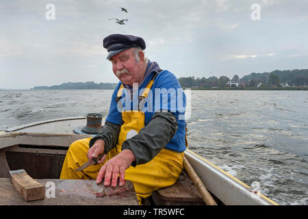 fisherman in his boat on Schlei inlet , Germany, Schleswig-Holstein - Stock Photo