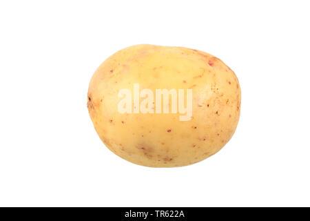 potato (Solanum tuberosum Quarta), potato of cultivar Quarta, cutout - Stock Photo