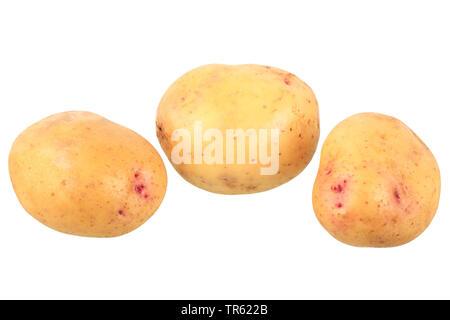 potato (Solanum tuberosum Quarta), potatoes of cultivar Quarta, cutout - Stock Photo
