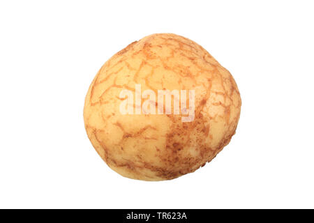 potato (Solanum tuberosum La Barotte), potato of cultivar La Barotte, cutout - Stock Photo
