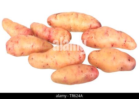 potato (Solanum tuberosum Bamberger Hoernchen), potatoes of cultivar Bamberger Hoernchen, cutout - Stock Photo