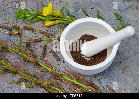 common evening primrose (Oenothera biennis), seed in a mortar, production of a evening primrose oil, Germany - Stock Photo