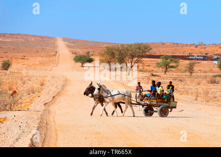 children driving with donkey and carriage through the desert, Namibia, Brandberg - Stock Photo