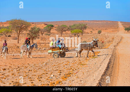 children riding donkeys and driving with donkey and carriage through the desert, Namibia, Brandberg - Stock Photo
