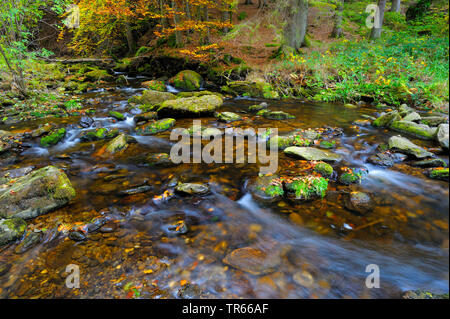 Steinklamm gorge with Grosse Ohe river in autumn, Germany, Bavaria, Bavarian Forest National Park, Spiegelau - Stock Photo