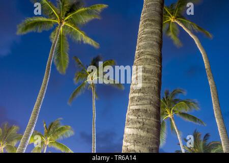 palms in wind at night at the beach of Bo Phut Beach, Thailand, Ko Samui - Stock Photo