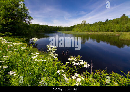 lake in nature reserve Rotes Moor, Germany, Hesse, Rhoen - Stock Photo