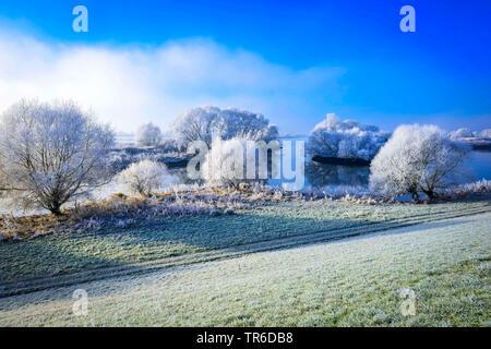 Elbe landscape in winter at Kirchwerder, Germany, Hamburg, Vier- und Marschlande, Naturschutzgebiet Zollenspieker - Stock Photo