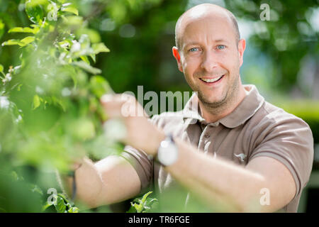 apple tree (Malus domestica), man at tree care operation in the garden, Germany - Stock Photo