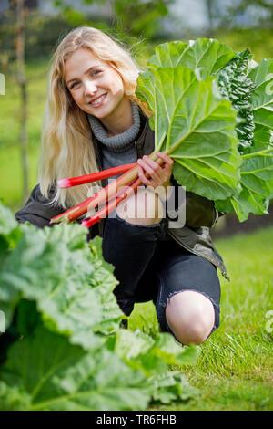 rhubarb (Rheum rhabarbarum), young blond woman picking fresh rhubarb , Germany - Stock Photo
