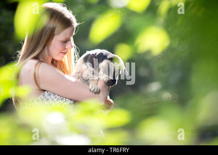 domestic dog (Canis lupus f. familiaris), young woman holding a cute Puggle on arm, Germany - Stock Photo