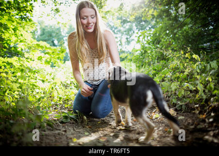 domestic dog (Canis lupus f. familiaris), young woman kneeing in forest ground and playing with a cute Puggle, Germany - Stock Photo